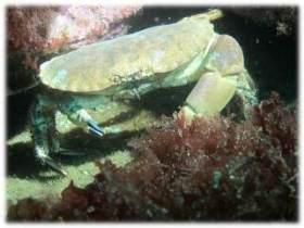 krabba 2012